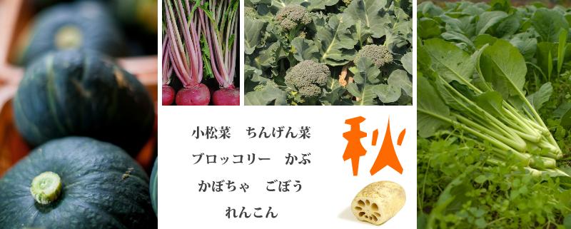 秋 小松菜 ちんげんさい ブロッコリー かぶ かぼちゃ れんこん
